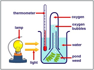Photosynthesis experiment lab light intensity and wavelength